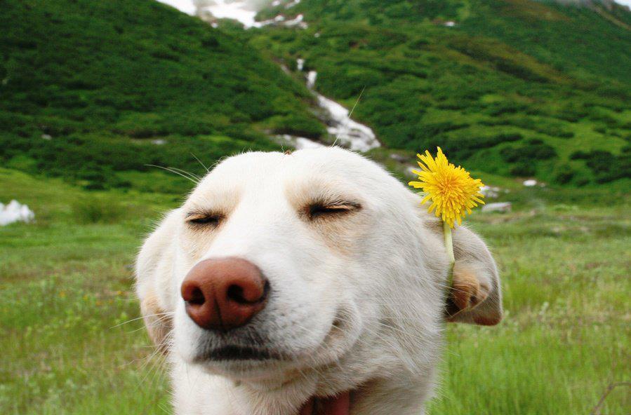 Веселото куче